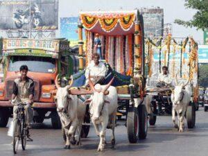 Ox and Bullock Cart Wedding