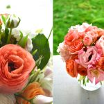 You're Ultimate Care Guide for Coral flowers