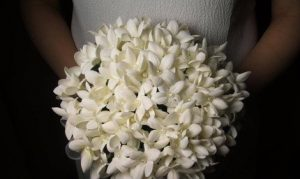 Stephanotis Flower